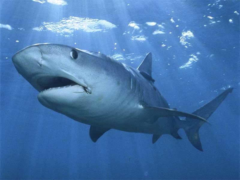 защита от акул спама